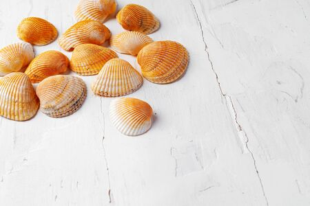 White wooden with sea shells, copy space Standard-Bild