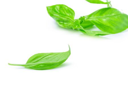 Close up of fresh green basil herb leaves isolated on white background