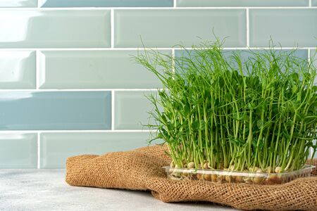 Micro green sprouts growing in tray in kitchen against mint tile wall. Healthy eating Archivio Fotografico