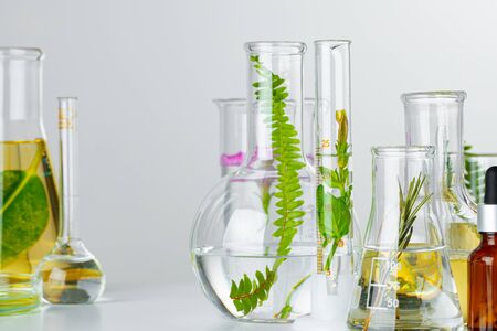 Plants in laboratory glassware on white background. Skincare products and drugs chemical researches concept