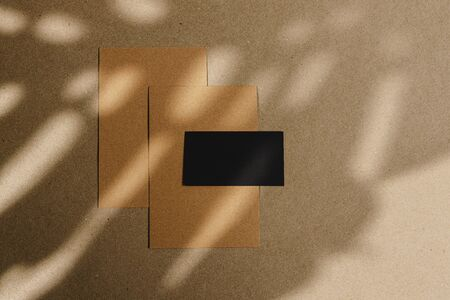 Envelopes on cork board with leaf shadow