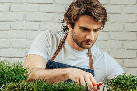 Caucasian man grows micro green at home