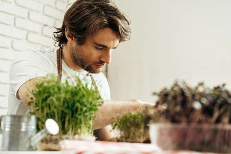 Attractive bearded man farmer taking care of sprouts of microgreens