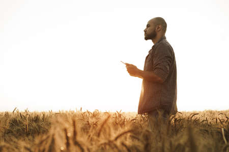 Man using smartphone while standing in wheat field at sunset Stock Photo