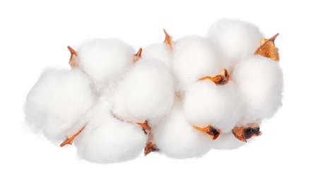 Cotton flowers on white background Stock Photo