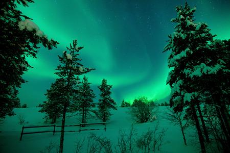 Beautiful aurora borealis with snow and trees Stock Photo