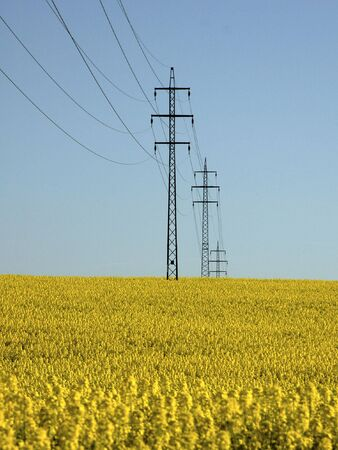 Rapeseed and power lines