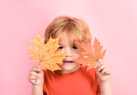 lovely kid boy has fun with autumn orange leafs. Colorful autumn.