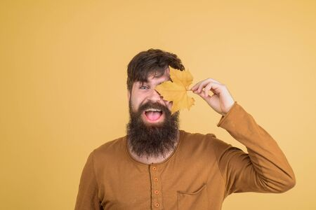 Autumn mood. Happy man covered eyes with autumn leaf. Autumn time. Smiling bearded man with yellow leaves in hand. Seasonal fashion. Autumn clothing. Men fashion. Leaf fall. Male with golden leaf