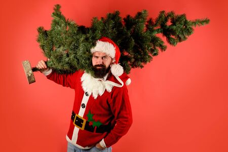Christmas, new year, holidays. Santa man carrying christmas tree. Christmas decor concept. Bearded man dressed in festive costume of Santa Claus carries Christmas tree. Pine tree. Santa Claus costume