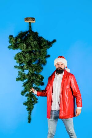 Santa man carrying christmas tree. Christmas, new year, holidays. Christmas decor concept. Bearded man dressed in festive costume of Santa Claus carries Christmas tree. Pine tree. Santa Claus costume.