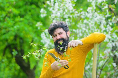 Gardening. Work in garden. Bearded gardener with gardening scissors. Work in garden. Gardener work. Farm. Spring. Smiling man preparing to planting. Plants