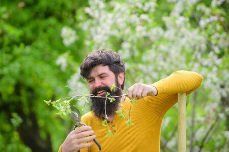 Gardening scissors. Plants. Work in garden. Bearded gardener with gardening scissors. Work in garden. Gardener work. Farm. Spring. Smiling man preparing to planting Archivio Fotografico