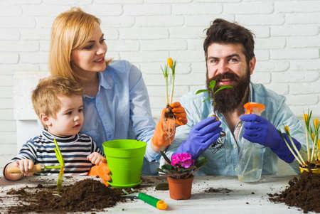 Springtime. Family plant flowers. Son helps parents to planting flower. 版權商用圖片