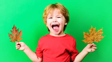 Happy Autumn child boy with maple leaf. Smiling kid with Yellow leafs. Autumnal mood.