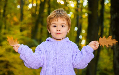 Happy child plaing with autumn leaves in park. Smiling Cute kid boy in sweater at forest.