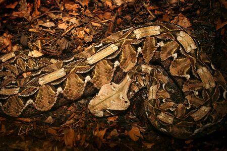 Camouflaged Python Stock Photo - 5147299