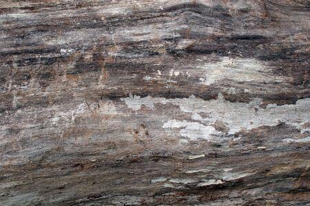 Wood Textures on Felled Tree