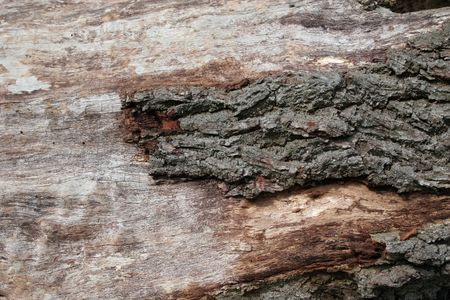 Wood and Bark Textures on Felled Tree