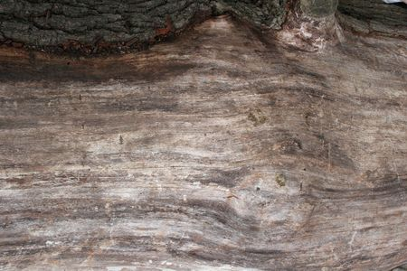 Wood and Bark Textures on Felled Tree