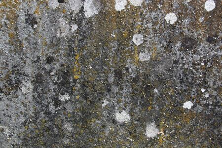 Lichen, Stains and Erosion on Stone Stock Photo