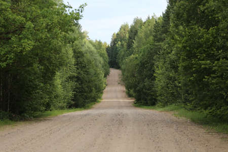 dirt: Dirt road through the woods Stock Photo