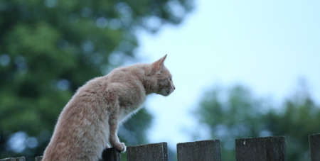 distance: Cat stares into the distance