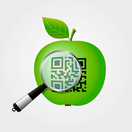 Magnifying glass checking QR-code on green apple. Vector illustration.