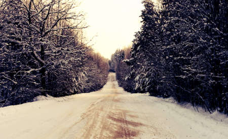 Winter country road in a wood 写真素材