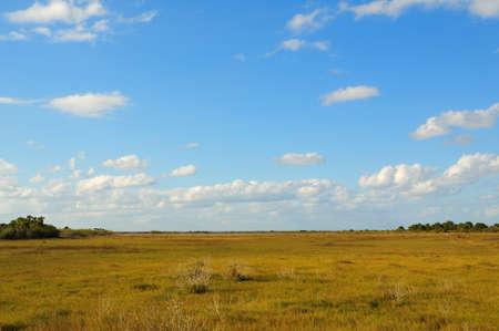 Florida landscape of field taken in merritt island wildlife refuge photo