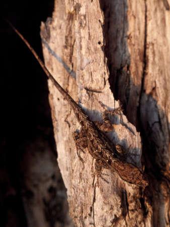 Een bruine anole loopt langs de kant van een boom Stockfoto