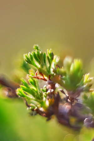 Closeup of young grass shoots in warm sunlight and abstract bokeh background