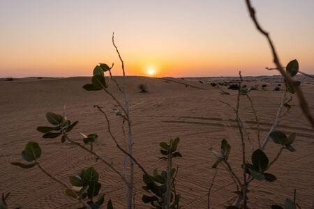 Sunset in Dubai Desert