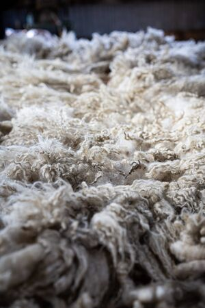 Sheared lamb or sheep wool on a table