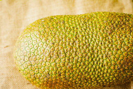 Artocarpus integer, commonly known as chempedak or cempedak is a species of tree in the family Moraceae, and in the same genus as breadfruit and jackfruit. It is native to southeast Asia