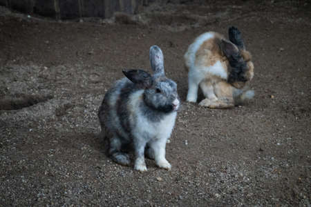 Cute Rabbits inside cage at a petting zoo