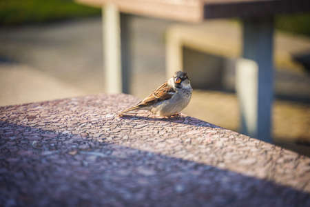 A cute bird on table in outdoor park