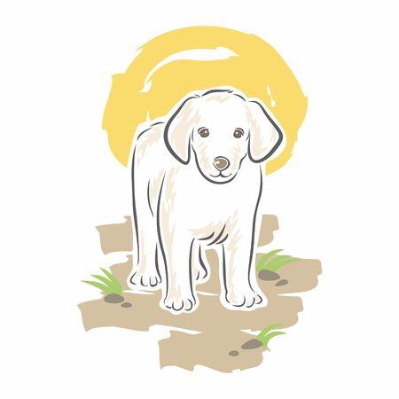 cute dog: Cute White Dog