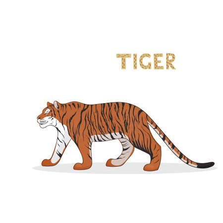 Un tigre de dibujos animados, aislado en un fondo blanco. Alfabeto animal. Ilustración de vector