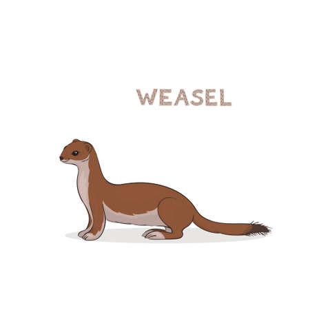 A cartoon cute weasel, isolated on a white background. Animal alphabet. Illustration