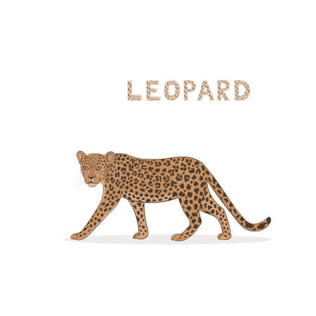 Vector illustration, a cartoon leopard, isolated on a white background.