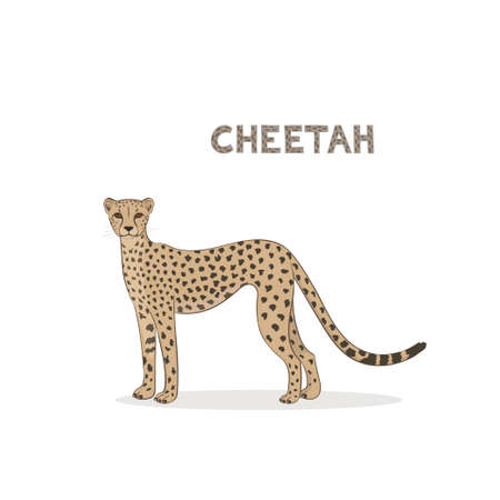 Vector illustration, a cartoon cheetah, isolated on a white background. Ilustrace