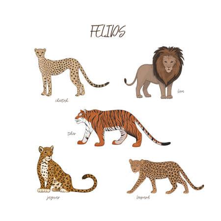 Vector illustration, set of cartoon cute felids. Cheetah, lion, tiger, jaguar, leopard