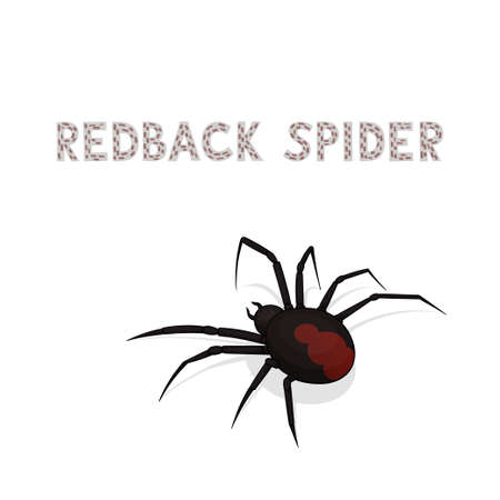 Vector illustration, a cartoon redback spider, isolated on a white background. Animal alphabet.