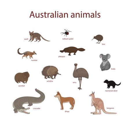 Vector illustration, set of cartoon Australian animals. Quoll, redback spider, kiwi, numbat, platypus, koala, wombat, echidna, emu, tasmanian devil, crocodile, dingo, kangaroo