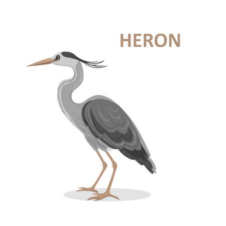 Vector illustration, a cartoon beautiful Great-billed Heron. Isolated on a white background Illustration