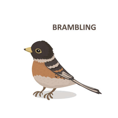 Vector illustration, a cartoon cute brambling. Isolated on a white background.