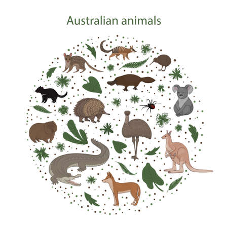 Vector illustration, set of cartoon cute Australian animals with leaves flowers and spots in a circle. Quoll, redback spider, kiwi, numbat, platypus, koala, wombat, echidna, emu tasmanian devil crocodile dingo kangaroo
