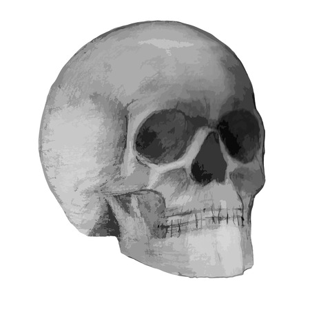 Illustration of hand drawing scull.