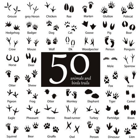 動物: 設置的動物和鳥類足跡與名稱。 向量圖像